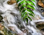 Rushing Water - Imperial Gardens
